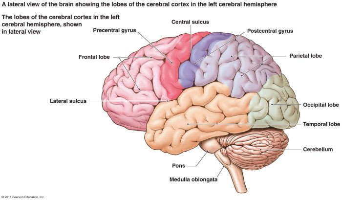 Cerebellar disorders normal axial mri brain ccuart Choice Image