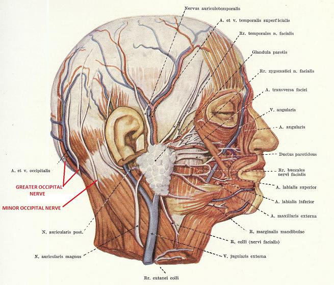 Image from http www scienceofmassage com dnn som journal 1204