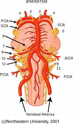brainstem arteries